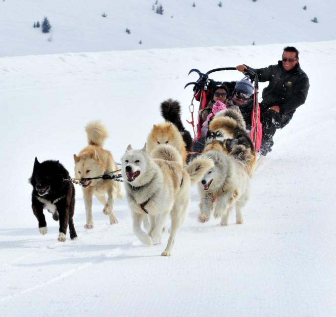 chiensdetraineau-activité-musher-tourisme-evolution2